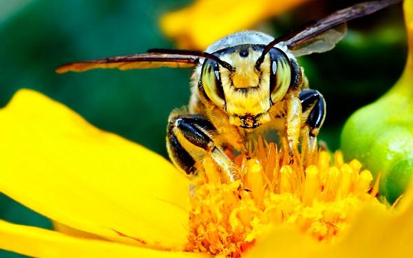داروهای لازم جهت زمستان گذرانی  زنبور عسل