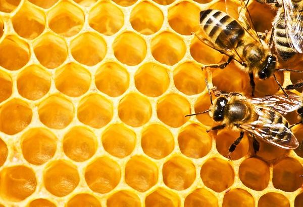 موم زنبور عسل و نحوه استخراج آن