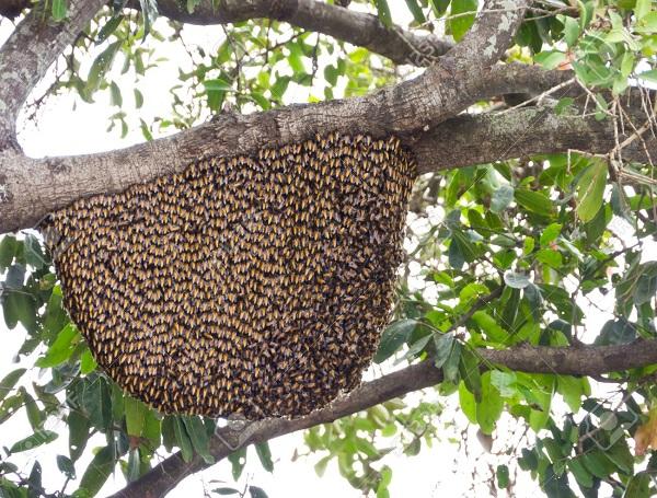 تولید مثل و تشکیلات کندوی زنبور عسل