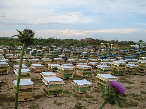 از کجا و چگونه زنبور داری را شروع کنیم ؟