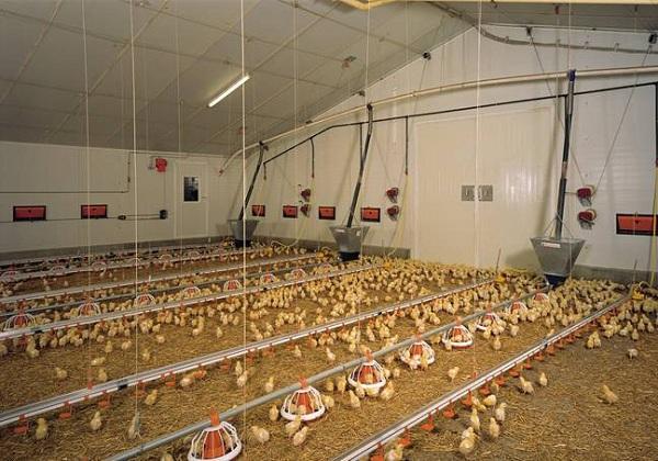 صرفه جویی انرژی در مرغداری با لامپ های LED
