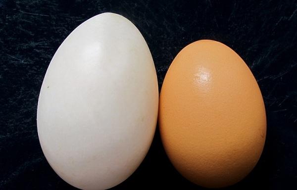 نقص طبیعی تخم مرغ ها در مقابل آلودگی