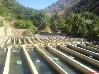 اهمیت بیوفیلتر در صنعت آبزی پروری