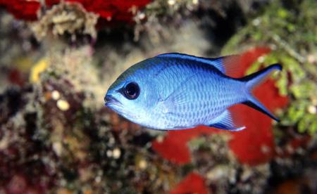 عفونت های استر پتوکوکال در ماهی ها