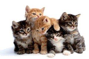 رابطه انگل گربه با بروز سرطان و بیماری های عصبی