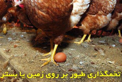 جلوگیری از تخمگذاری طیور بر روی زمین یا بستر