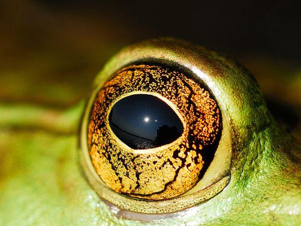 چشم به این زیبایی دیده بودید؟+ عکس