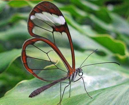 حیواناتی عجیب و خارق العاده شیشه ای