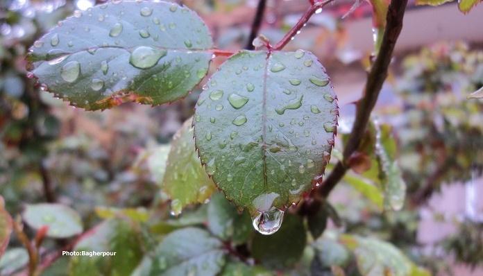 برگ و باران...