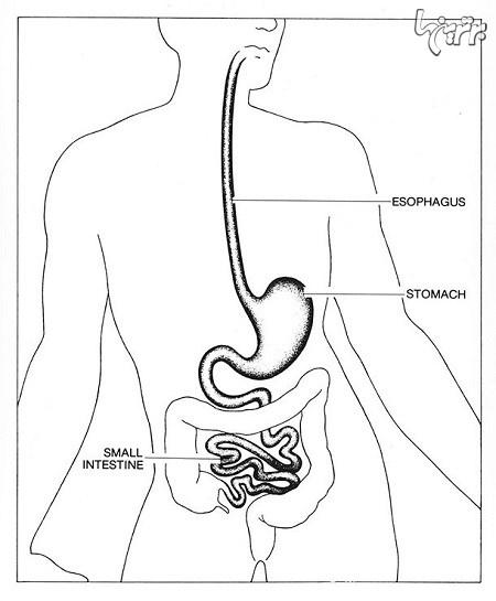 25 حقیقت جالب درباره سیستم گوارش بدن انسان