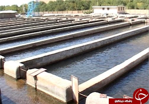رتبه نخست تولید ماهی پرورشی لرستان در بین استانهای غیر ساحلی / پرورش ماهی آزاد برای اولین بار در ل�