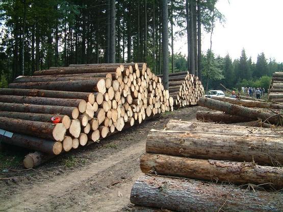 برداشت چوب از جنگلهای شمال کاهش یافت/ ایران جزو کشورهای موفق در حوزه حفاظت از جنگل