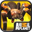 دانلود Real Scary Spiders 1.4.3 – بازی پرورش عنکبوت اندروید + مود !