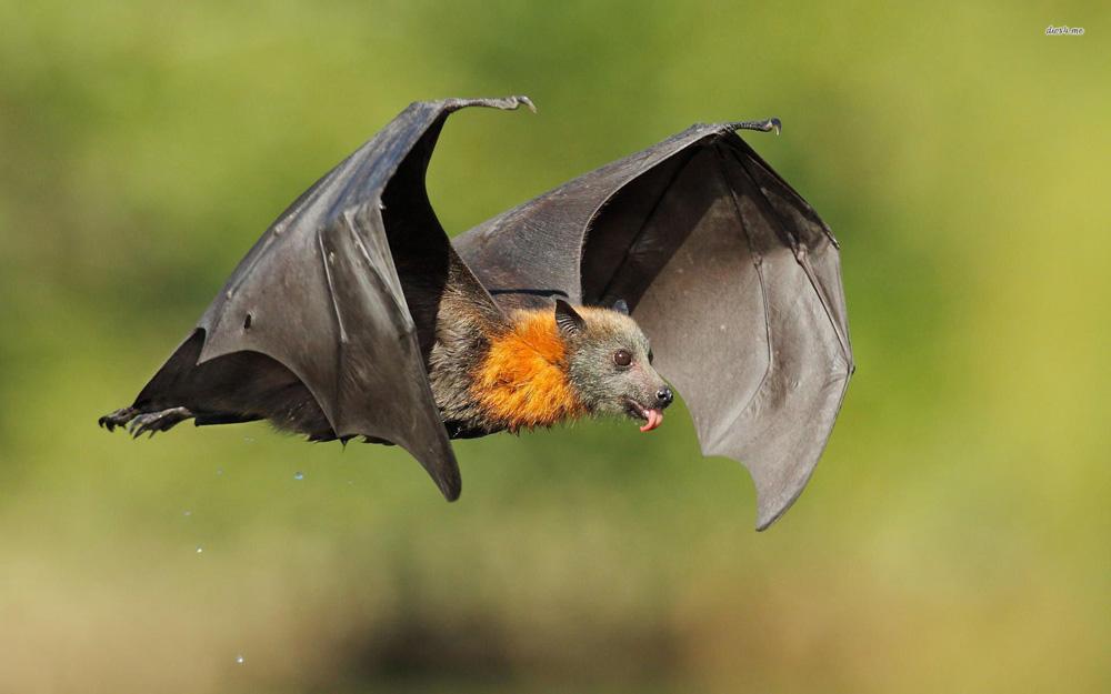 خفاش ها چگونه زندگی می کنند