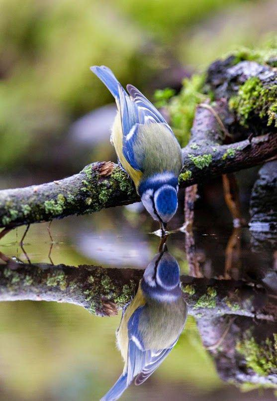 عشق و رشد معنوی - تعایم عرفانی