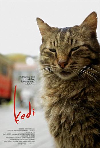 دانلود فیلم Kedi 2016 با زیرنویس فارسی