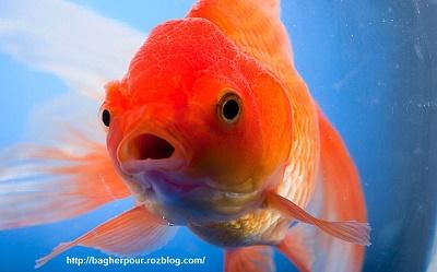 جهان جوی و صفا بحر و تو ماهی...
