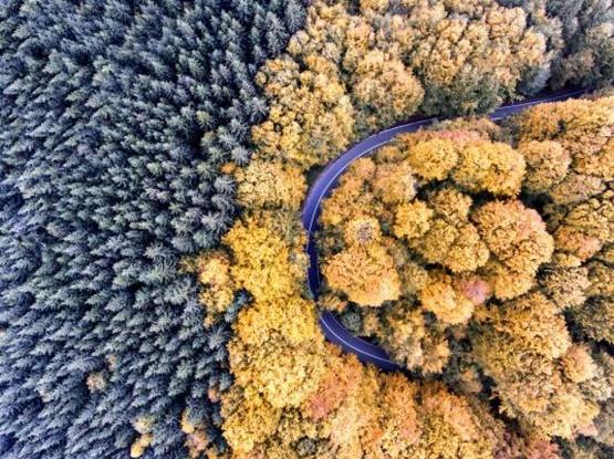 تصاویر حیرت انگیز از پاییز پادشاه فصل ها