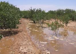 روش تعیین مقدار بهینه اقتصادی مصرف آب در باغ های پسته