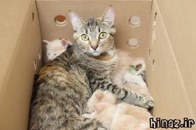 راز واکنش گربه ها به مجید!