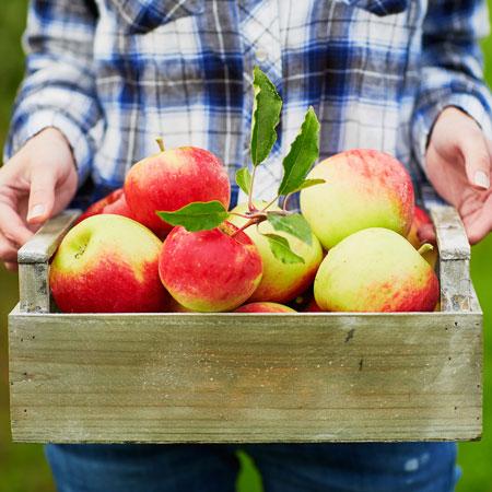 معرفی میوه سیب
