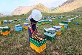 اموزش 20 ستون اصلی زنبورداری