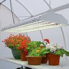 اموزش اصول پرورش گیاهان آپارتمانی