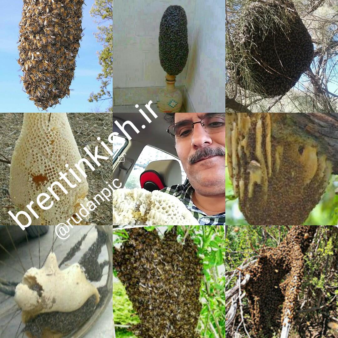 خواص عسل  طبیعی - نوروز میرزاده