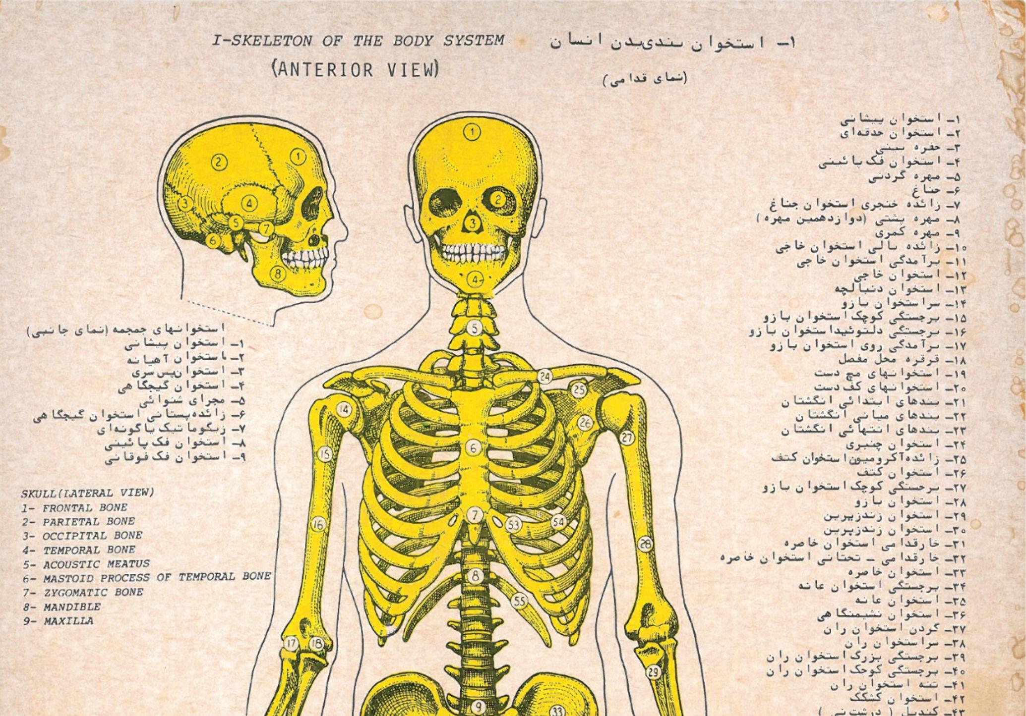 دانلود آناتومی کامل بدن انسان بصورت تصویری