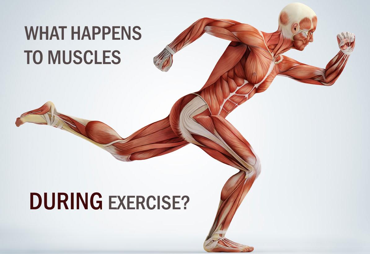 دانلود پاورپوینت دروس تربیت بدنی