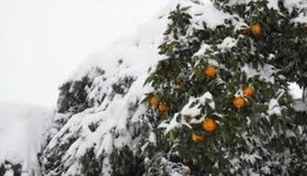 دانلود کتابچه مصور مدیریت یخبندان باغات