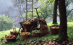 تعبیر خواب باغ میوه
