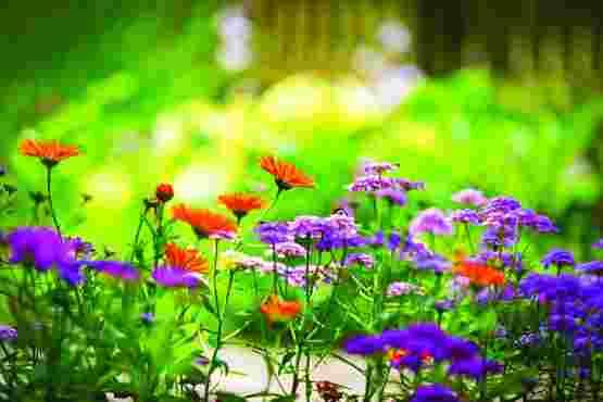 کدام گیاه هوای خانه را تصفیه میکند