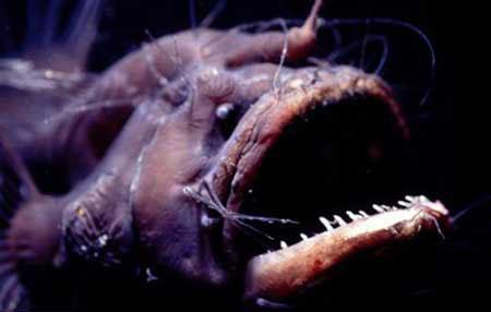 زشت ترین جانوران جهان که تا به حال ندیده اید+ فیلم