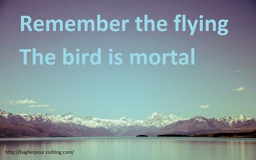 پرواز...
