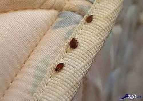 پاورپوینت مبارزه با حشرات و جوندگان در مهدهای کودک