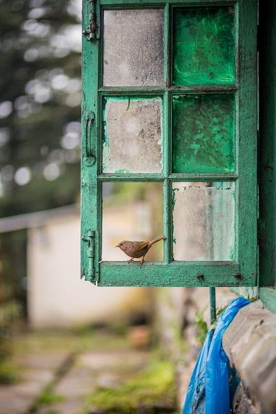 پرنده و پنجره...