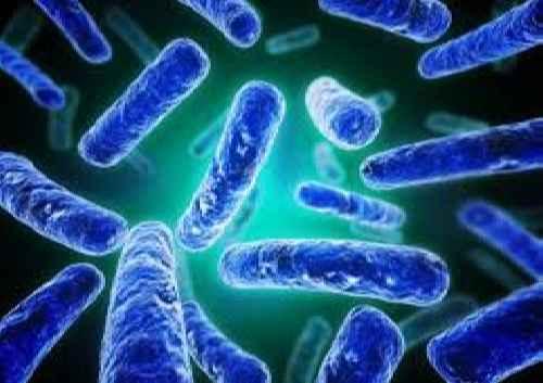 آنزیم های میکروبی