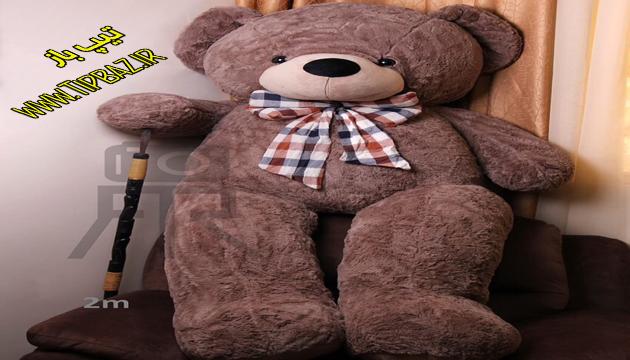 خرس پاپاراتزی دو متری
