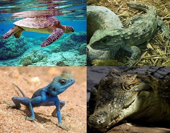 حیواناتی که شاید تاکنون ندیدهاید +تصاویر