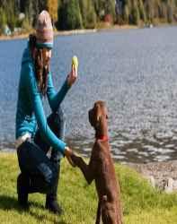 دانلود خود آموز تربیت سگ