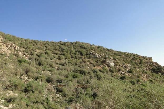 کوه دال نشین ارسنجان