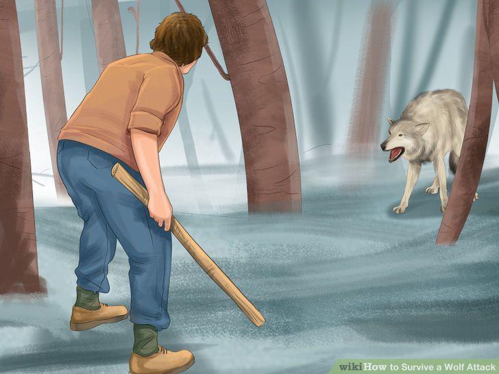 داستان مراد و حمله حيوان وحشي
