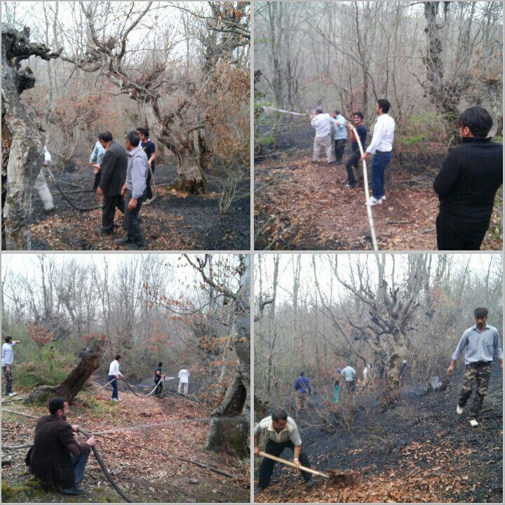 آتش سوزی در جنگل های مرگاب