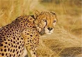 پاور پويينت حیوانات در حال انقراض ایران