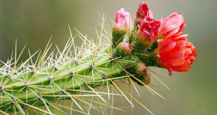 هر که او را روان بیدار است    ///    داند هر جا گل است با خار است