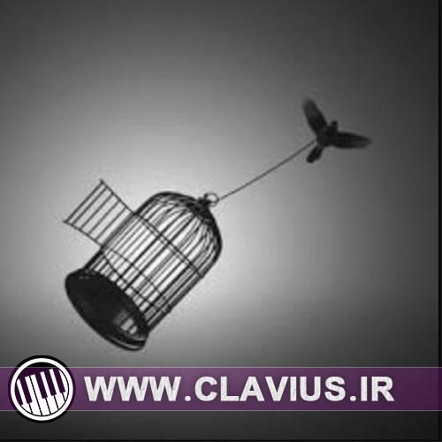 ترانه ی پاپ رایگان بنام پرنده ی مهاجر | محمد عابدینی