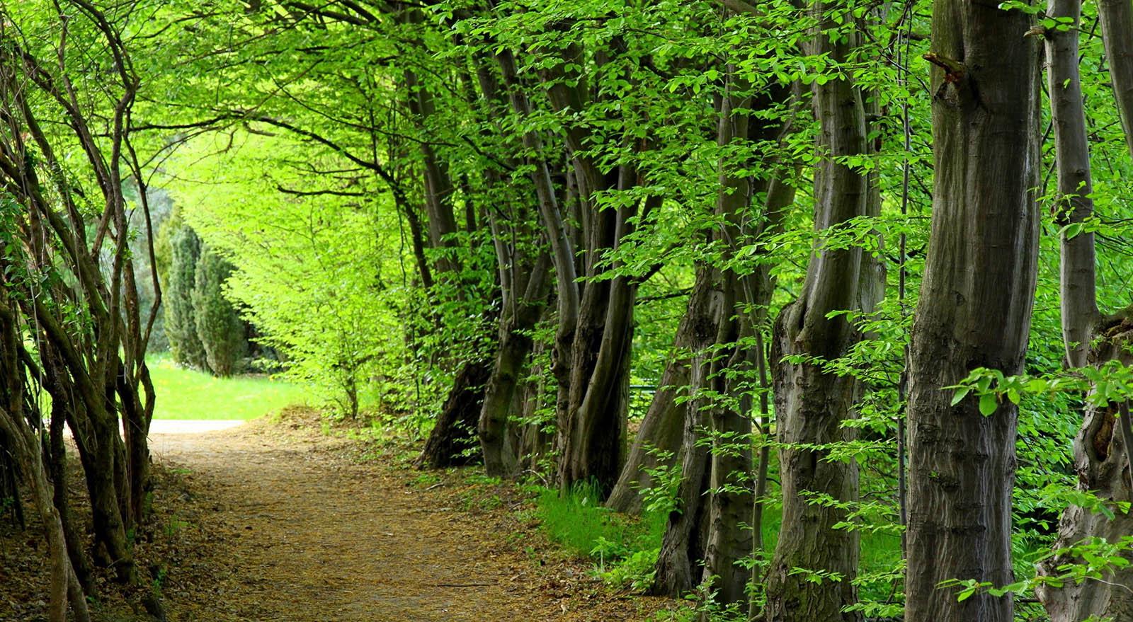 میراث طبیعی جنگل های هیرکانی ایران در آستانه ثبت جهانی