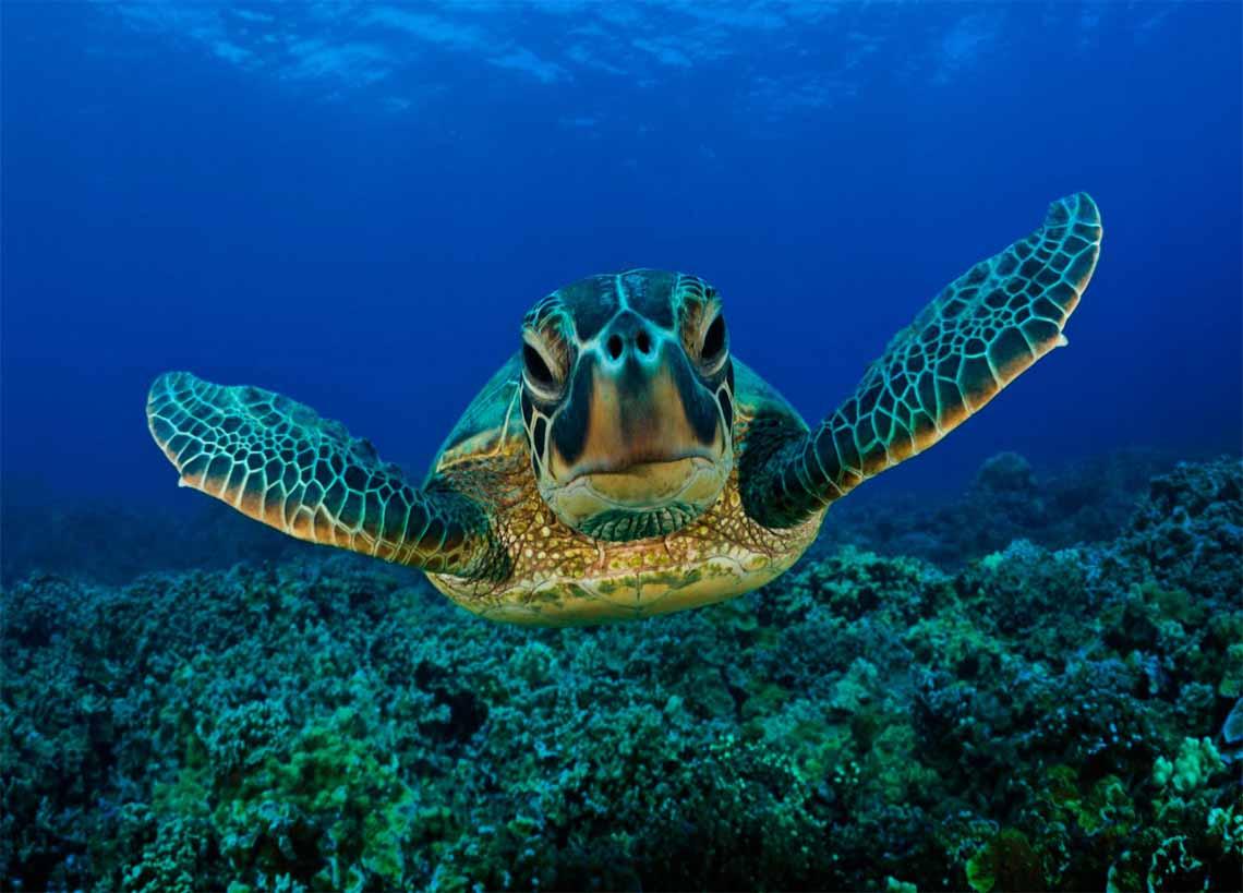 لاک پشت های دریای