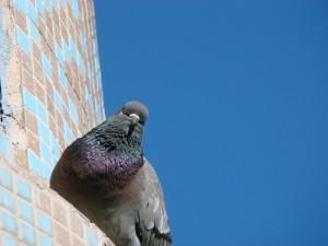 قصه ی حوض و کبوتر